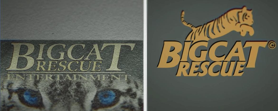 netflix-big-cat-1